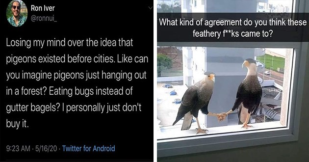 birds aggressive memes birbs lol funny animals pics tweets signs hilarious | Ron Iver @ronnui_ Losing my mind over idea pigeons existed before cities. Like can imagine pigeons just hanging out forest? Eating bugs instead gutter bagels personally just don't buy | kind agreement do think these feathery f**ks came ? bird shaking hands
