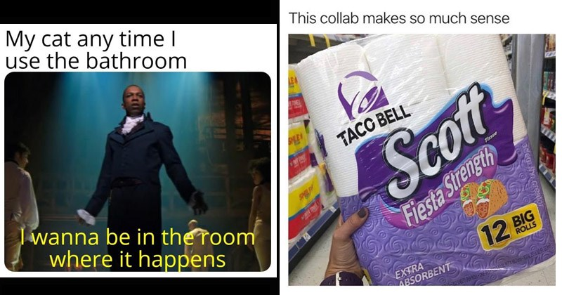 Funny random memes | My cat any time use bathroom wanna be room where happens | This collab makes so much sense TOVES MLE TACC BELL Scott CO ING Tissue Fiesta Strength EXTRA ABSORBENT 12 BIG ROLLS ademshe.