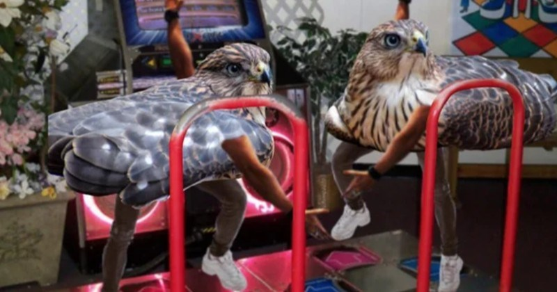 A collection of photoshopped pictures showing birds with arms | funny birds playing DDR dance dance revolution