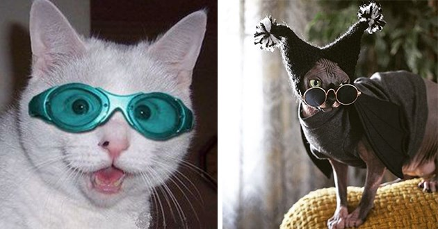 I Can Has Cheezburger Glasses Funny Animals Online Cheezburger,Hacks Space Saving Ideas For Small Apartments