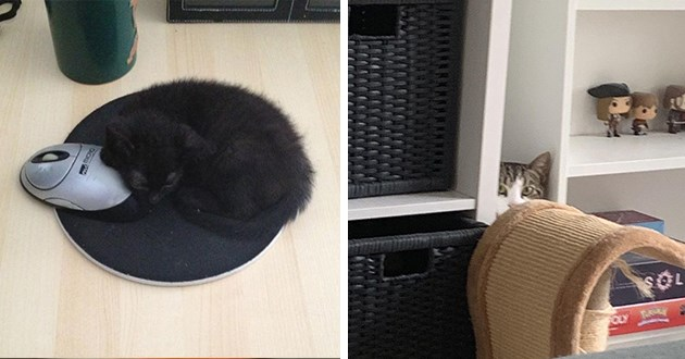 camouflage cats funny lol cute aww animals cat kitten kittens kitties pics photos | adorable black kitten snuggled on top of a black mouse pad | funny cat peeking from between shelves