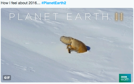 twitter planet earth snow fox metaphor - 1214469