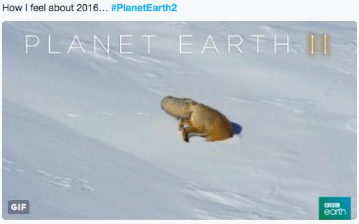 twitter planet earth snow fox metaphor - 1214469