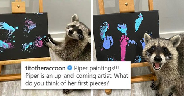 raccoons painting wholesome aww raccoon paint adorable cute tito piper cheeto animals | titotheraccoon Piper paintings!!! Piper is an up-and-coming artist. What do you think of her first pieces