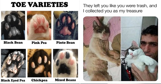 caturday cat memes funny lol cute cats aww animals silly humor relatable | TOE VARIETIES Black Bean Pink Pea Pinto Bean Black Eyed Pea Chickpea Mixed Beans | They left like were trash, and collected as my treasure before and after cat rescue