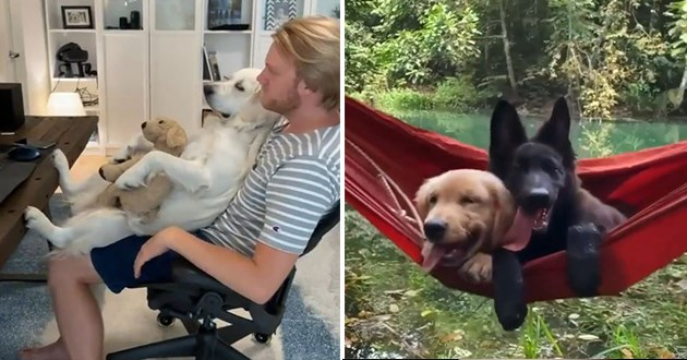dog doggo gifs cute dogs doggos animals cute aww funny lol wholesome vids uplifting | man sitting in a desk cradling a dog who is cradling a smaller dog plushie stuffed you | two adorable dogs snuggling in a hammock