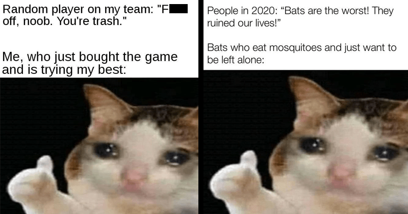 funny memes about thumbs up crying cat, cat memes, video games, gaming memes, mosquitoes, bats, 2020 memes | Random player on my team Fuck off, noob trash who just bought game and is trying my best: | People 2020 Bats are worst! They ruined our lives Bats who eat mosquitoes and just want be left alone: