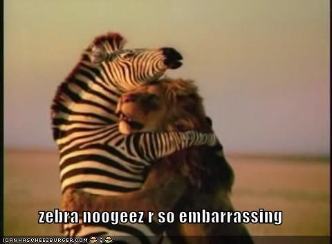 Zebra Noogeez R So Embarrassing Cheezburger Funny Memes Funny