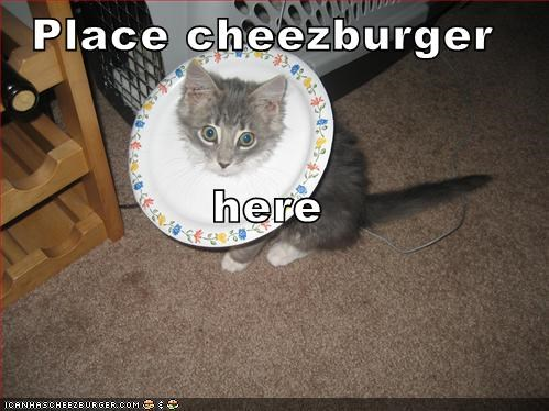 Cheezburger Image 1215454976