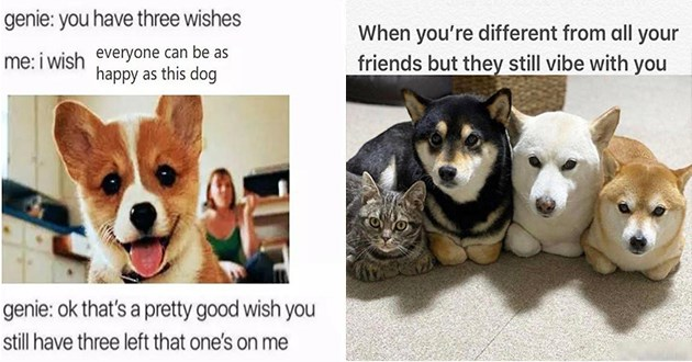 wholesome animals memes aww cute adorable animal meme cats dogs uplifting | genie have three wishes wish everyone can be as happy as this dog genie: ok 's pretty good wish still have three left one's on | different all friends but they still vibe with cat in a row of dogs
