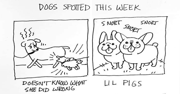 dogs doggo good boys girls aww animals report art artist comics illustrations instagram | 3.20-2010 DOGS SPOTTED THIS WEEK SNORT SNORT SNORT LIL PIGS DOESN'T KNOW SHE DID WRONG MRRRRRF REALLY WANTS YELL AT EVERYONE CAPTAIN