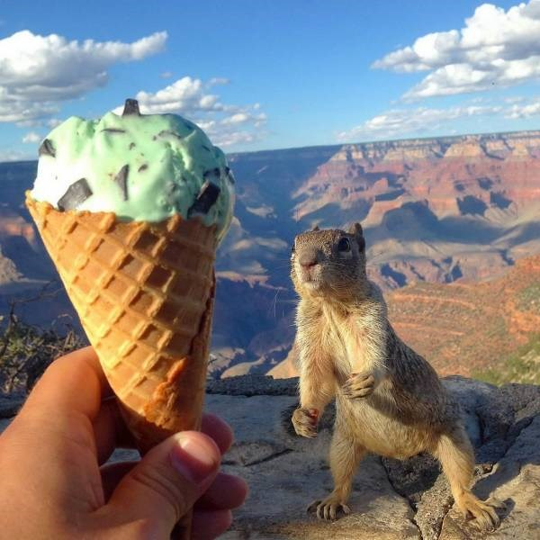 amazing animal photos pics worth 1000 words wow incredible animals cats dogs | squirrel looking at a mint chocolate chip ice cream in a cone