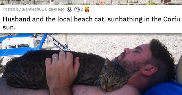 cat medley cats animals funny pics heartbreaking wholesome mourning loss cute cuteness | Husband and the local beach cat, sunbathing in the Corfu su cat sleeping on top of a man