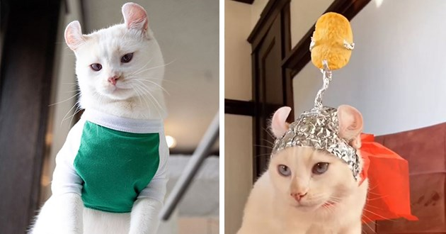 pringles cat instagram spotlight funny lol vids pics adorable cute aww cats animals | cute white cat wearing a green shirt and a hat made of aluminium foil