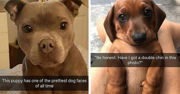 dogs doggo snaps snapchat doggos puppies aww animals funny lol wholesome uplifting good boys girls | This puppy has one prettiest dog faces all time | Be honest. Have got double chin this photo?