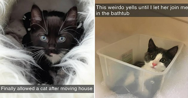 cat snaps snapchat funny cats aww lol cute adorable pics wholesome uplifting | Finally allowed cat after moving house adorable black kitten | This weirdo yells until let her join bathtub cat sitting in a plastic container floating in a tub