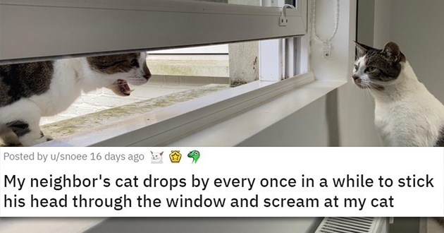funny animals jerks lol cats dogs pics vids videos aww cute reddit hilarious humor | My neighbor's cat drops by every once in a while to stick his head through the window and scream at my cat