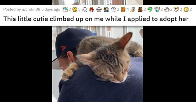 adopt adopted cats dogs animals aww cute wholesome uplifting forever homes pets rescue shelter seniors kittens puppies   This little cutie climbed up on me while I applied to adopt her cat on a person's shoulder