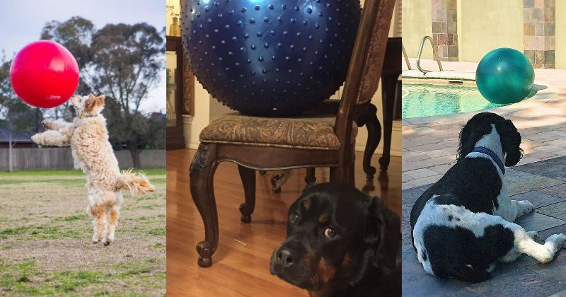 dogs,ball,exercise ball