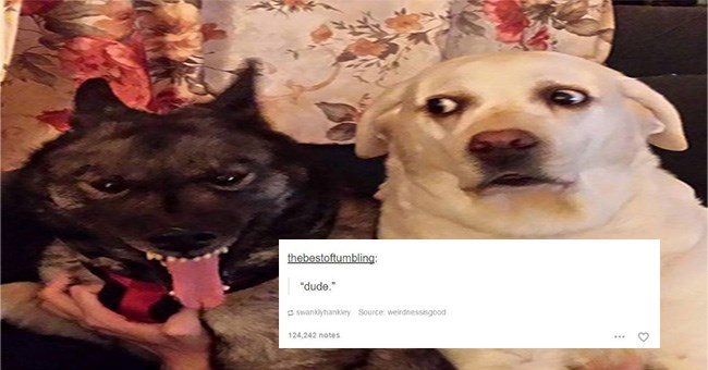 "A very funny thumbnail to a list of thirty funny dog tumblr posts and the image is two dogs the one of the left side is a black dog with a scary face and on the right side is a dog looking at him and the text below says ""dude"""