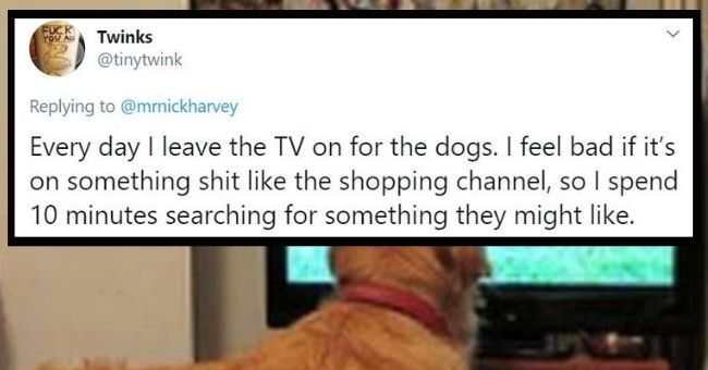 twitter thread about unique daily rituals - cover pic about person leaving TV on for their dogs | FUCK ALL Twinks @tinytwink Replying mrnickharvey Every day leave TV on dogs feel bad if 's on something shit like shopping channel, so spend 10 minutes searching something they might like