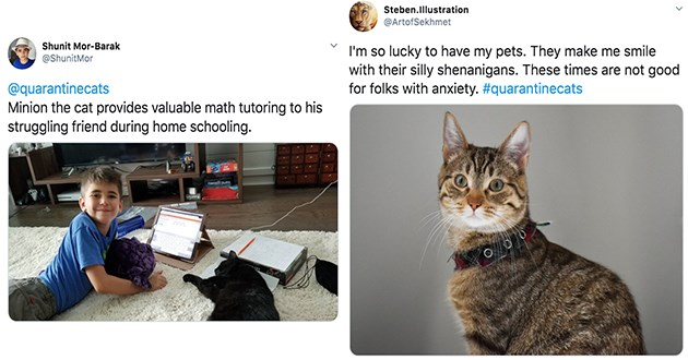 cats tweets quarantine heroes pets animals study studies adopting aww love anxiety happiness | Shunit Mor-Barak @ShunitMor @quarantinecats Minion cat provides valuable math tutoring his struggling friend during home schooling. FORNDDEN ISLAND | Steben.Illustration @ArtofSekhmet so lucky have my pets. They make smile with their silly shenanigans. These times are not good folks with anxiety quarantinecats