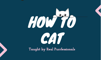 "a thumbnail which is all navy color with the white text of ""how to cat"" taught by real purrfessionals, and a small animated kitten looking down, it is a thumbnails to a list of inforgraphic on how to act like a cat"