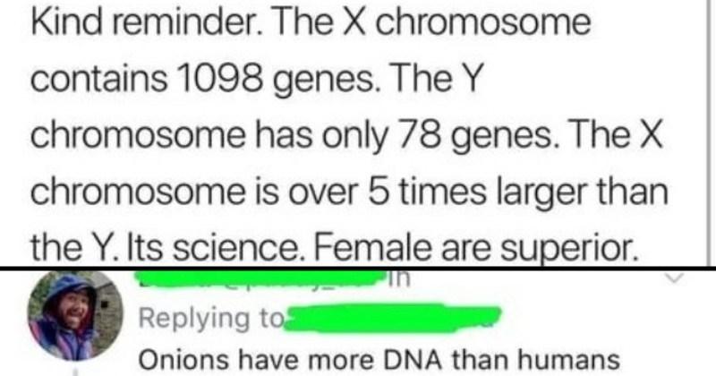 Smart comebacks that brought knowledge | 2degrees 12:14 AM Tweet Kind reminder X chromosome contains 1098 genes Y chromosome has only 78 genes X chromosome is over 5 times larger than Y. Its science. Female are superior. By far. Hence hundreds years chauvinism try suppress her. Goodnight. Replying Onions have more DNA than humans