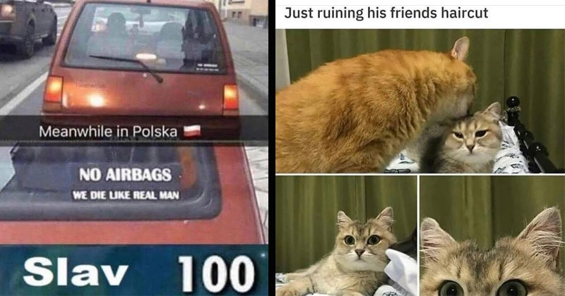 Funny random memes, tweets, and Tumblr posts | Meanwhile Polska NO AIRBAGS DIE LIKE REAL MAN Slav 100 | Just ruining his friends haircut cat licking a stripe on another cat's head