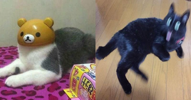 Japan,Cats,weird
