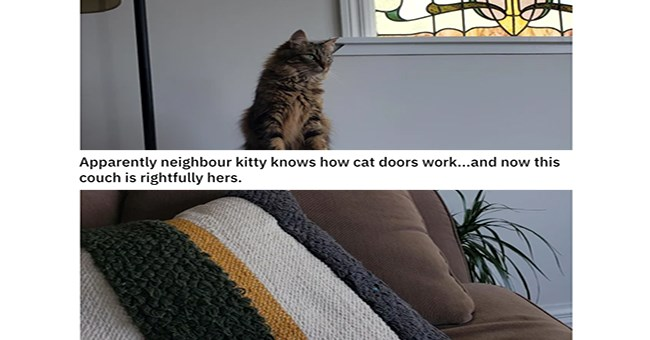 A funny thumbnail of a cat that snuck into a house and claimed the couch, a thumbnail for a list of other cats as people upload photos to the subreddit 'this is not my cat' | Apparently neighbour kitty knows cat doors work and now this couch is rightfully hers.