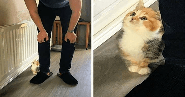 A collection of very small cats and the image of the collection shows the size to scale of how small the kittens are   tiny kitten next to a full sized human