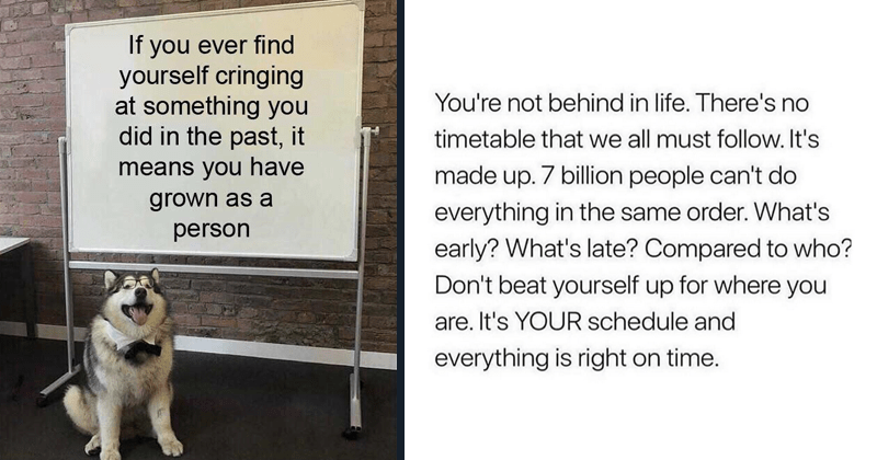 wholesome memes, wholesome tweets, twitter, inspirational, motivational, struggling, depression, mental heaalth, love, friendship | If ever find yourself cringing at something did past means have grown as person dog presentation | not behind life. There's no timetable all must follow s made up. 7 billion people can't do everything same order s early s late? Compared who? Don't beat yourself up where are s schedule and everything is right on time.