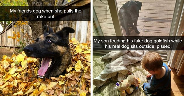 dogs wholesome doggo snaps cute lol funny adorable dog doggos snapchat animals silly | My friends dog she pulls rake out. happy dog in a pile of leaves | My son feeding his fake dog goldfish while his real dog sits outside, pissed.