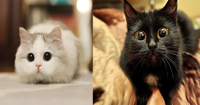 two adorable photos of cats right next to each other both showing their very wide eyes