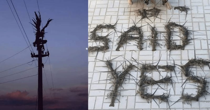 A collection of strange and cringeworthy images | engagement photo couple kissing next to the words SAID YES written in lobsters | scary winged creature on top of an electricity pole
