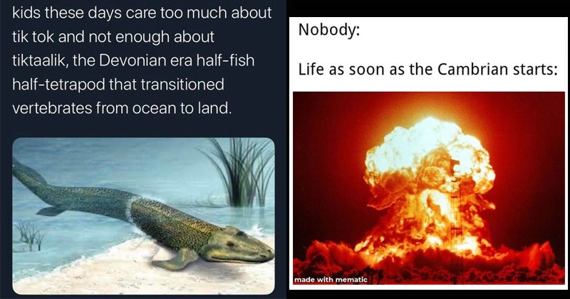 Funny memes about prehistoric animals, evolution | kids these days care too much about tik tok and not enough about tiktaalik Devonian era half-fish half-tetrapod transitioned vertebrates ocean land. | Nobody: Life as soon as Cambrian starts: made with mematic explosion
