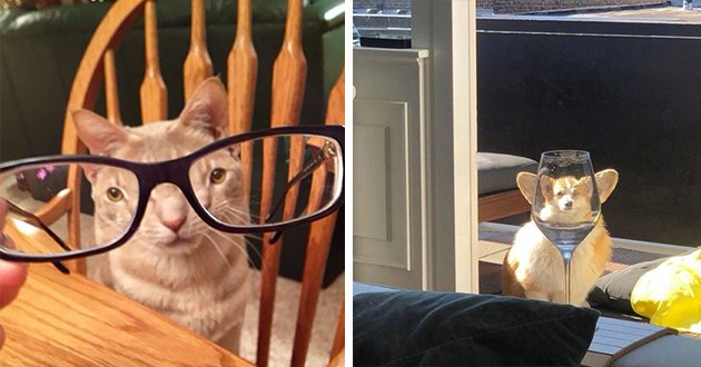 cats dogs distorted distortion animals pets lol funny silly humor cute aww wholesome   funny pic of a cat taken through glasses lenses making its eyes look tiny   dog's image distorted by a glass of water making its head look too small