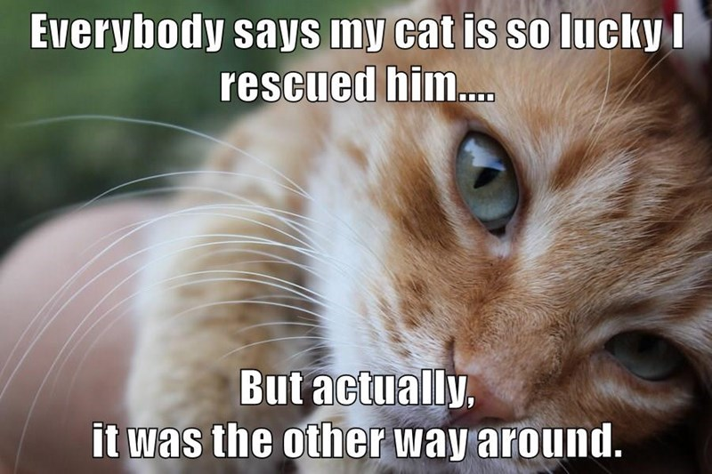 lolcats cats funny memes lol cat meme wholesome aww cute animals original | Everybody says my cat is so lucky rescued him But actually other way around.