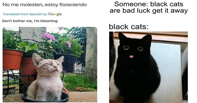 caturday funny cats memes cat lol aww animals wholesome humor | No molesten, estoy floreciendo Translated Spanish by Google Don't bother blooming cat with its eyes closed looking calm beside potted plants | Someone: black cats are bad luck get away black cats: cute cat tongue blep