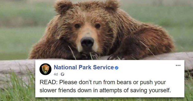 bears animals national park psa funny lol educational encounters informative information cute | National Park Serviceo 4d O READ: Please don't run bears or push slower friends down attempts saving yourself.