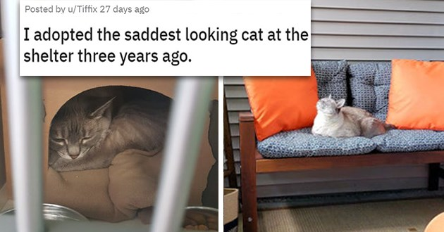 cats dogs before after adopted transformation glow up animals aww uplifting inspiring adoption love | I adopted the saddest looking cat at the shelter three years ago sad cat in a cardboard box and beautiful happy cat siting on a couch