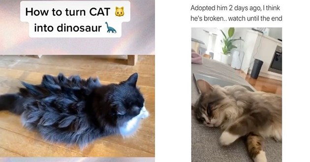 cats instagram videos funny best top viral animals kittens lol cute aww wholesome | Adopted him 2 days ago think he's broken..watch until end | turn CAT into dinosaur