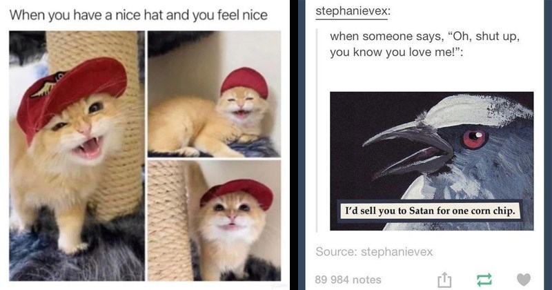 Funny random memes | stephanievex someone says Oh, shut up know love sell Satan one corn chip. Source: stephanievex 89 984 notes | have nice hat and feel nice cute cat in a baseball cap