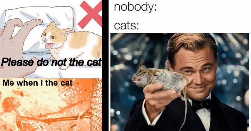 Funny and dank cat memes | Please do not cat cat wikihow illustration | nobody: cats: epreiycoolim Leonardo Dicaprio holding out a dead mouse