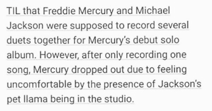 funny tumblr posts about history | TIL Freddie Mercury and Michael Jackson were supposed record several duets together Mercury's debut solo album. However, after only recording one song, Mercury dropped out due feeling uncomfortable by presence Jackson's pet llama being studio. via reddit.com