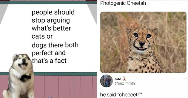 "animal memes wholesome aww adorable lol funny uplifting animals cute | people should stop arguing 's better cats or dogs there both perfect and 's fact dog presentation | Photogenic Cheetah suz @suz_mm12 he said ""cheeeeth"""