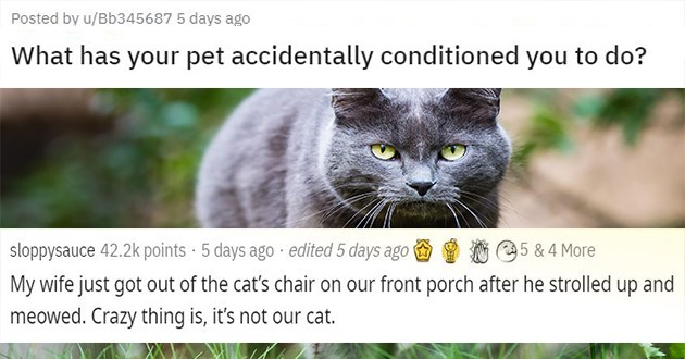 accidentally conditioned pets cats reddit askreddit thread animals dogs funny lol cute aww wholesome conditioning | Posted by u/Bb345687 has pet accidentally conditioned do? | sloppysauce 42.2k points 5 days ago edited 5 days ago 5 4 More My wife just got out cat's chair on our front porch after he strolled up and meowed. Crazy thing is s not our cat.