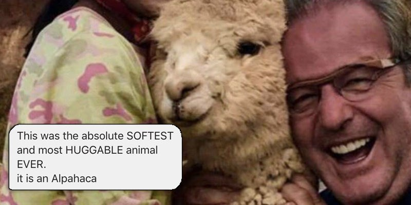 aww alpaca cute conversation parenting dad texting funny
