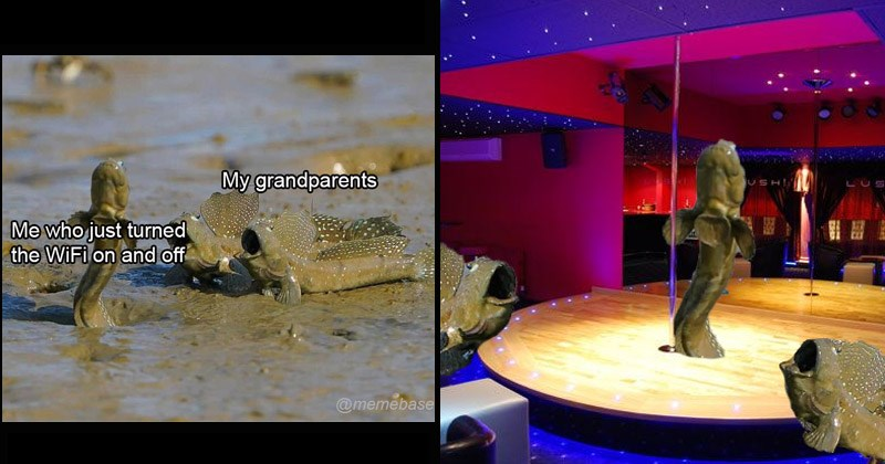 Funny dank memes that show two mudskipper looking impressed by another mudskipper | My grandparents who just turned WiFi on and off @memebase | strip club pole dancing